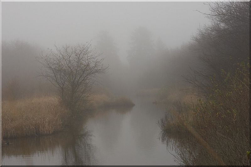 In the Mist of the Morning
